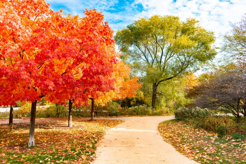 Colorful Autumn Trail near North Pond in Lincoln Park Chicago. A trail with colorful trees during autumn near North Pond in Lincoln Park Chicago royalty free stock images