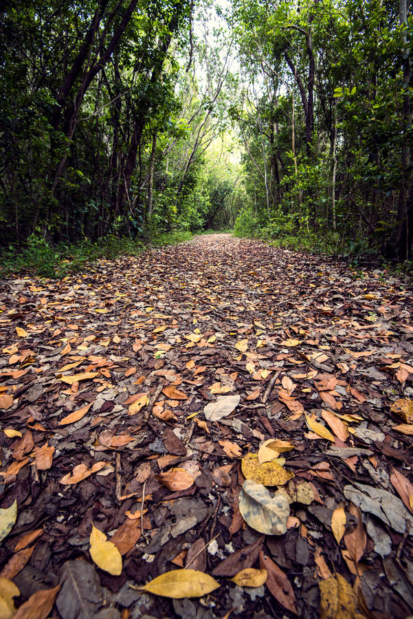 Trail covered with leaves royalty free stock photo