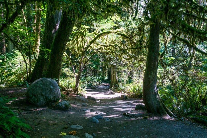 Trail door het regenwoud van Noord-Vancouver, Canada royalty-vrije stock afbeelding