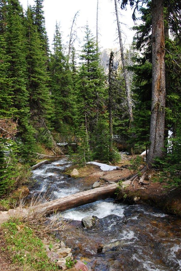 trail för berg för liten vikcrossing fotvandra royaltyfri fotografi