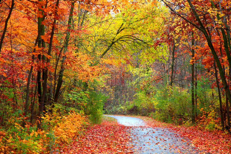trail för molnig för fern för höstbokträd slapp sky för lighting mycket royaltyfria bilder