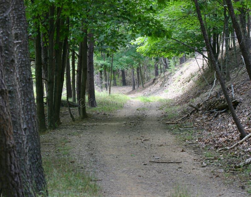 Download Trail för skogbergbana arkivfoto. Bild av natur, skog, trän - 990986