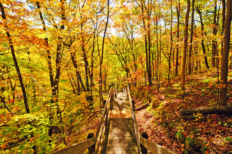 Trail into the Fall Forest royalty free stock images
