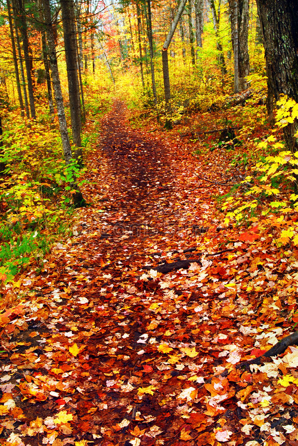 Trail in fall forest stock photo