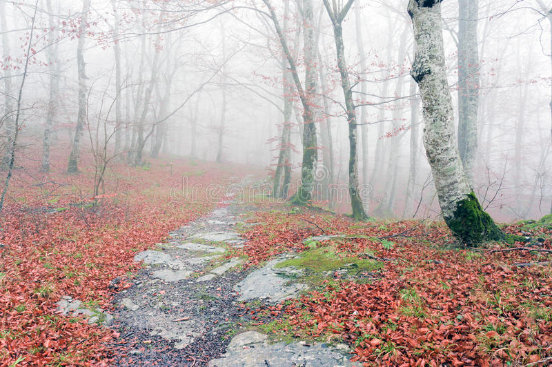 Trail in foggy forest on autumn stock images