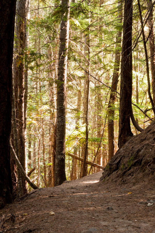 Trail in the forest stock photography