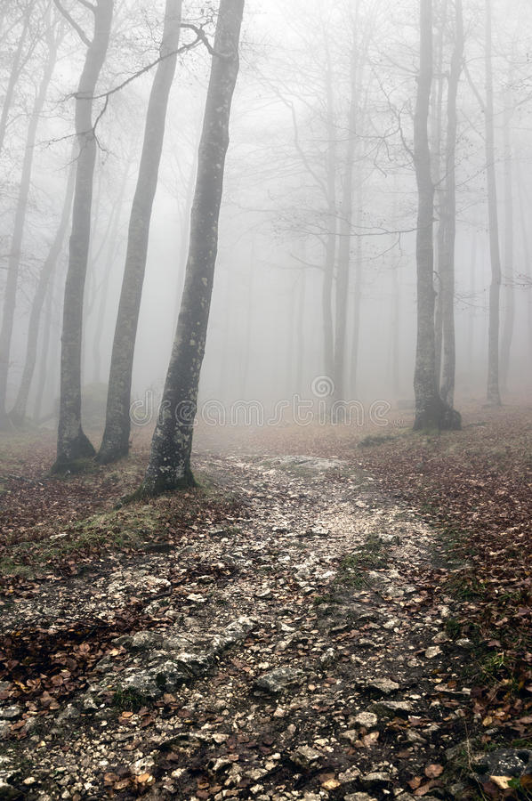 Trail in forest stock image