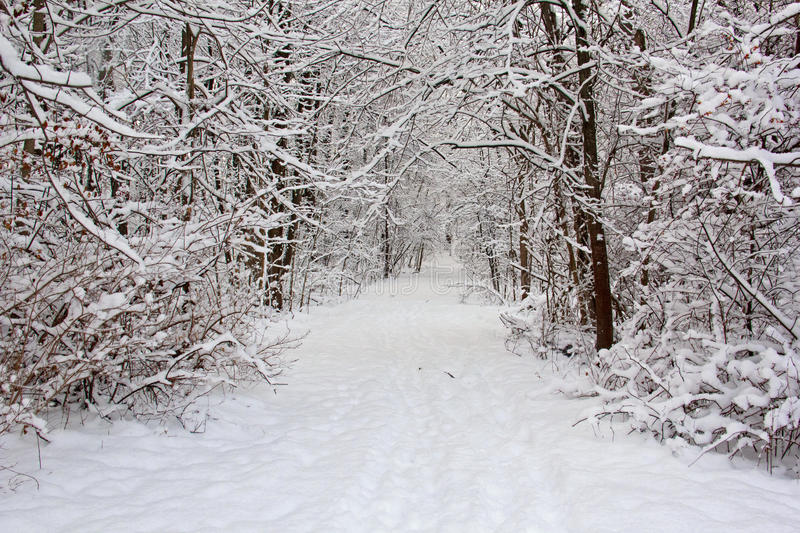 Trail after fresh snow royalty free stock photography