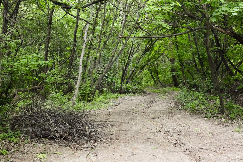 Trail in a green forest stock photography
