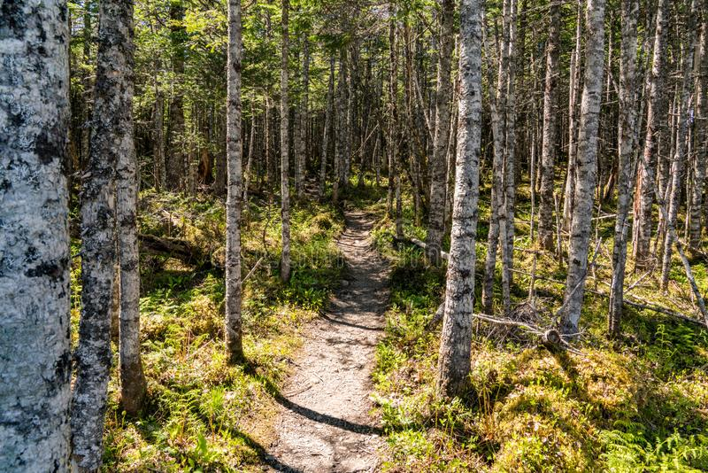Trail in Gros Morne National Park royalty free stock photography