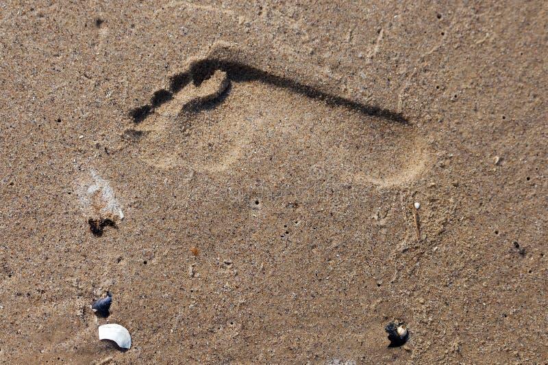 Trail of a human footprint on deserted sandy beach stock photo