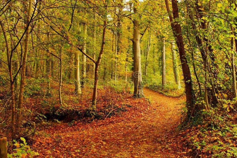 Trail i skogen royaltyfria bilder