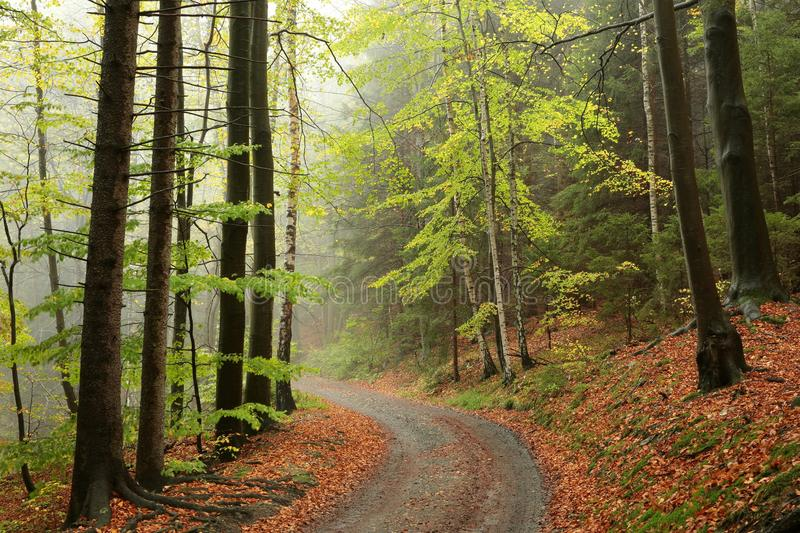 Path through early autumn forest in misty weather stock images