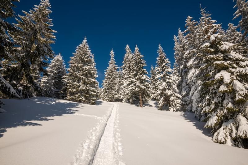 Trail leading to the top among the snow-covered huge fir trees stock images
