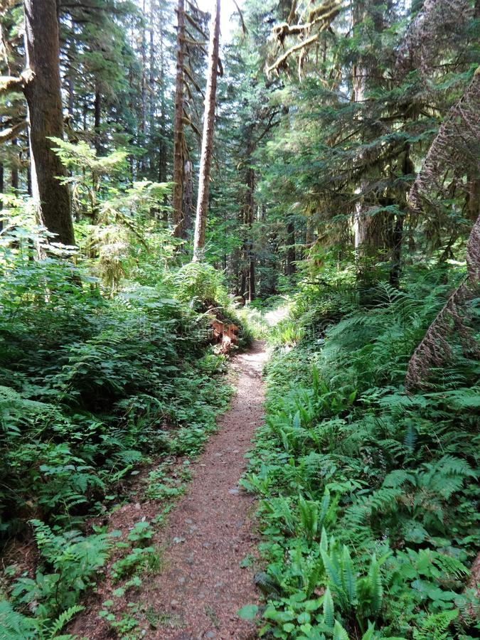 A trail leads to wilderness in North Cascades stock image