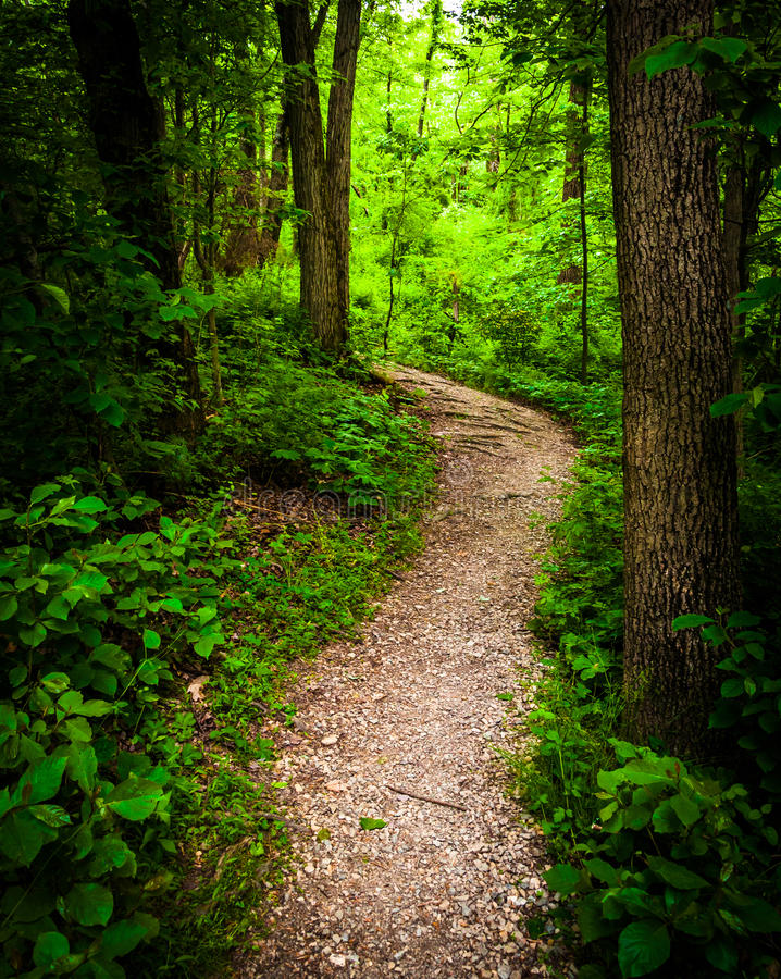 Trail Through Lush Green Forest In Codorus State Park
