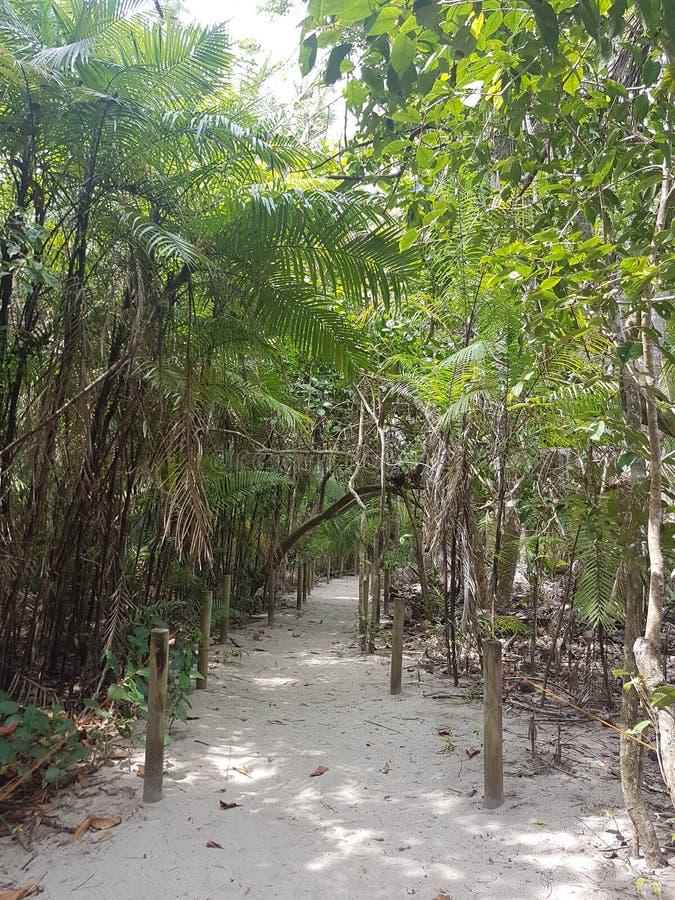 Trail from Manuel Antonio National Park. Costa Rica, Amerique Centrale stock photos