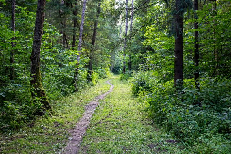 A trail through a mixed forest stock image