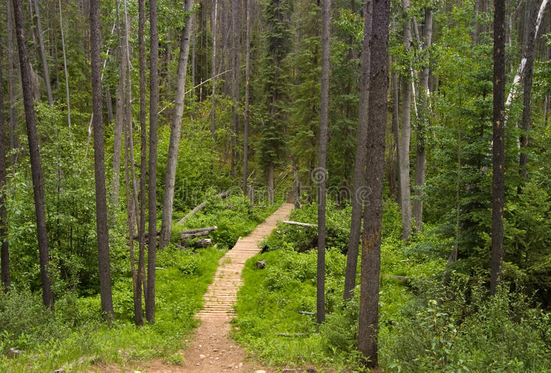 Download Trail in the mountains stock photo. Image of forest, countryside - 10810044