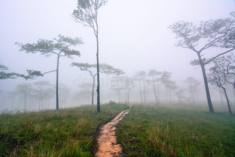Trail through a mysterious dark misty forest in fog. Autumn morn stock photo