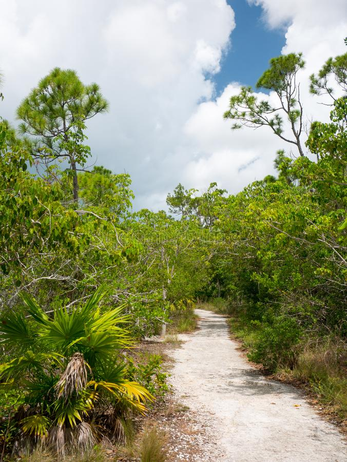 Trail in a National Park in Florida, United States.  stock photo
