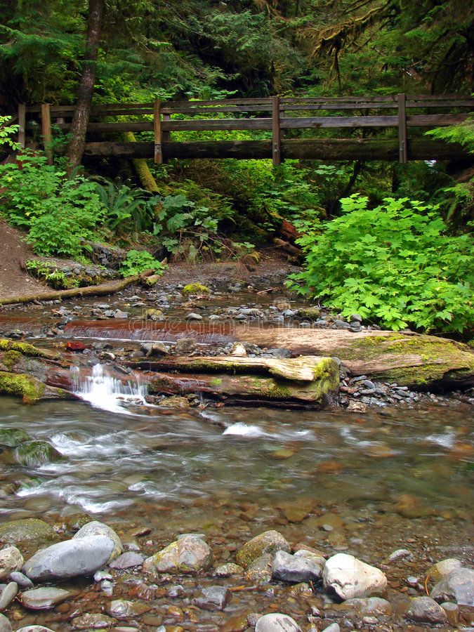Download Trail, Olympic National Park Stock Image - Image: 3435373