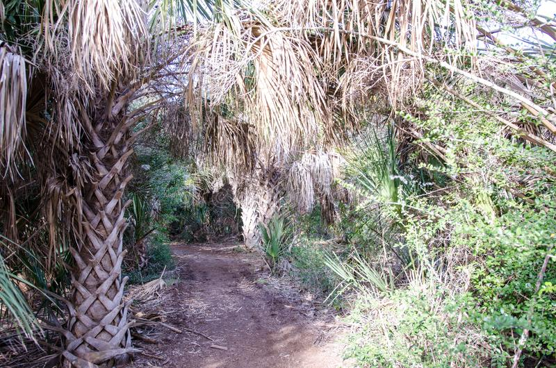 Trail through palm trees and dense tropical vegetation on a sunny day royalty free stock photography