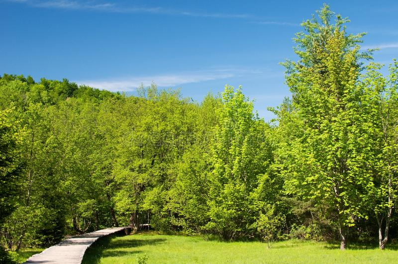Download The trail in the park stock photo. Image of blue, landscape - 25362496