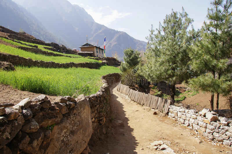 Trail by Rice Terraces stock photos