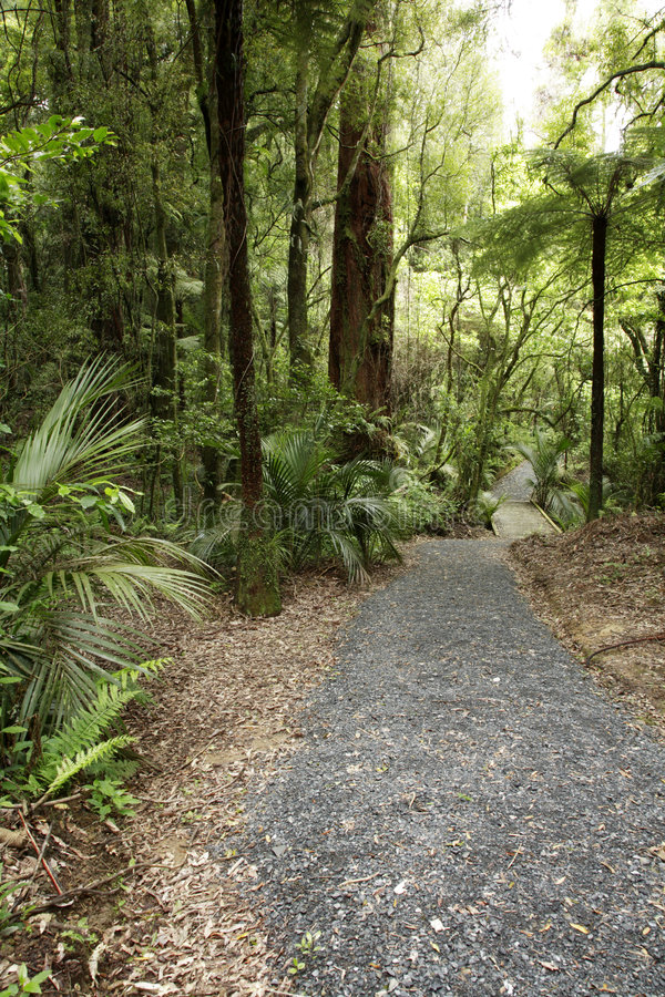 Trail through scenic forest royalty free stock photo