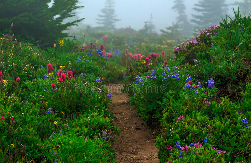 Trail in Spray Park, Washington State. Blossoming flowers on a foggy summer day line the trail at Spray Park in Mt. Rainier National Park in Washington State royalty free stock photo