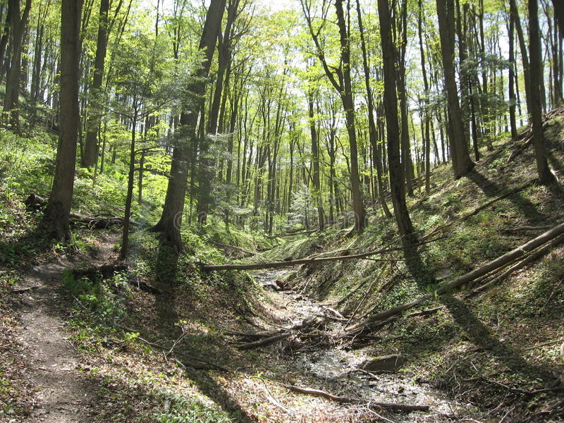 Trail in Springtime. A hiking trail through the woods in springtime with the leaves just coming out royalty free stock photography