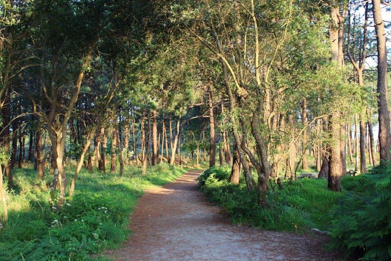 Trail till och med skogen arkivfoton