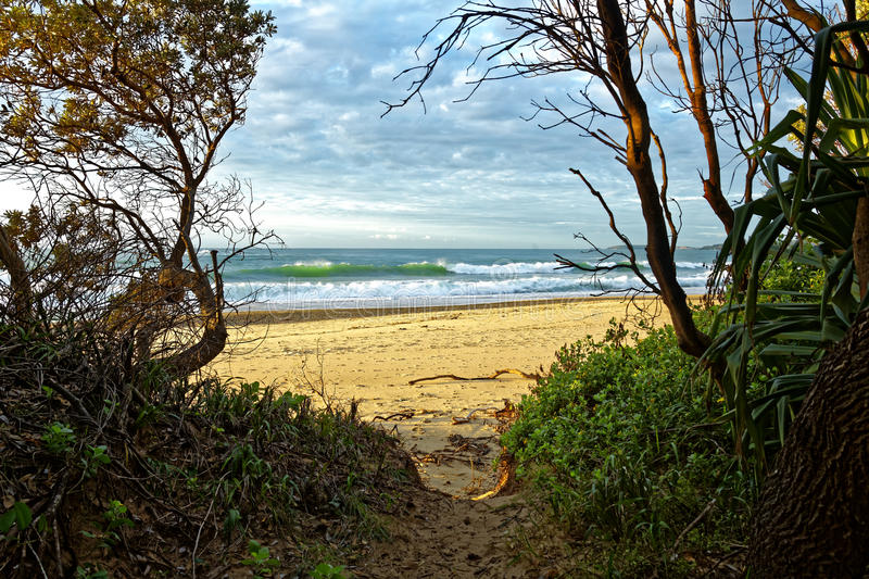 Trail to beach Australian nature in morning light royalty free stock image