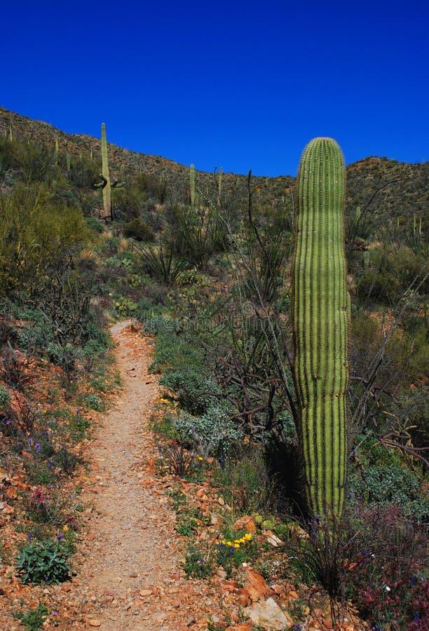 Trail to Wasson Peak royalty free stock photos