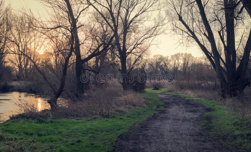 Trail through trees at daybreak stock images