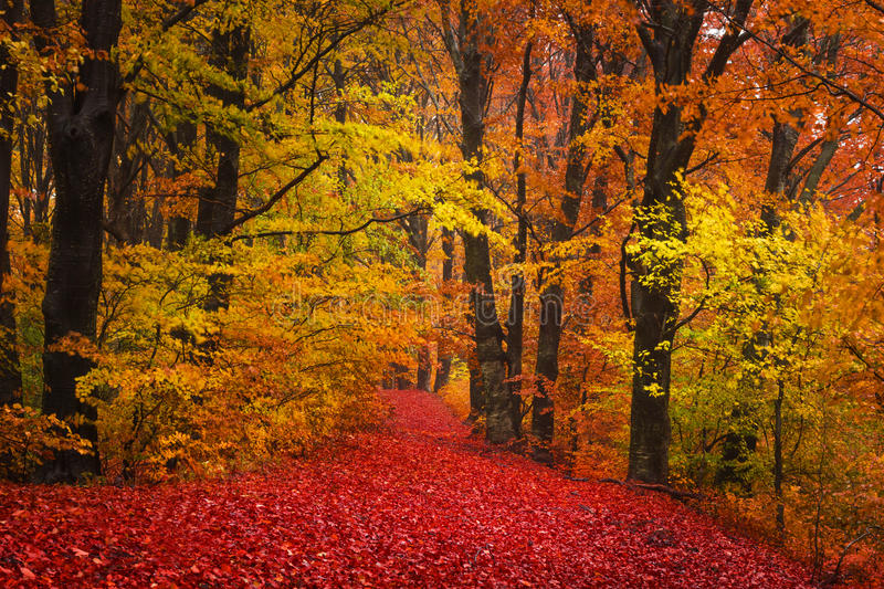Trail Trough A Autumn Forest With Fog Stock Photo