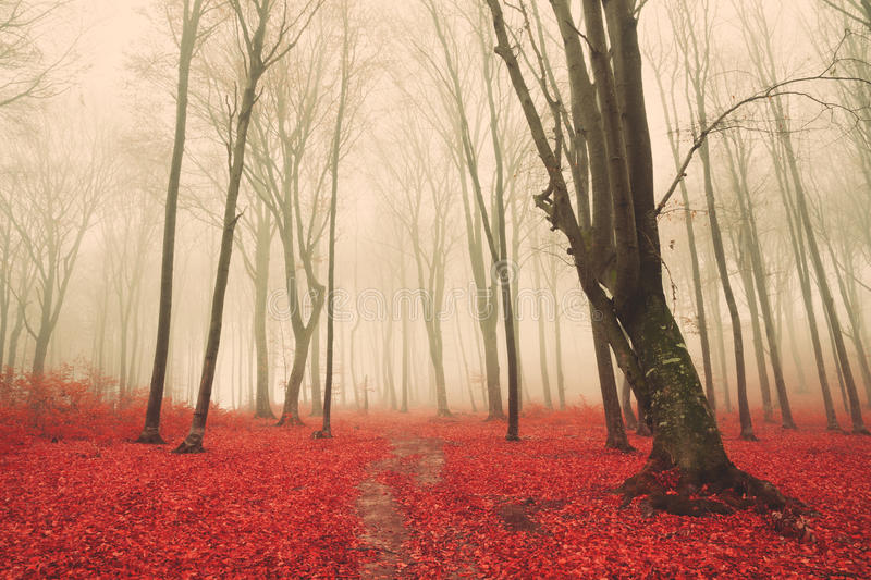 Download Trail Trough A Autumn Forest With Fog Stock Photo - Image: 43265002