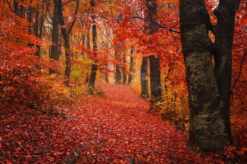 Download Trail Trough A Autumn Forest With Fog Stock Photo - Image: 43264979