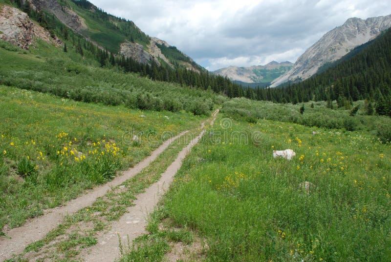 trail USA för fjädrar för berg för colorado fallmanitou arkivfoton
