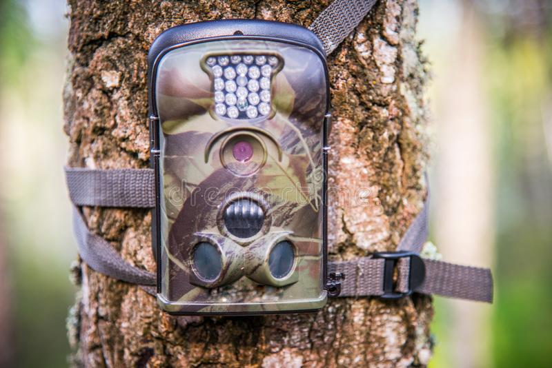 Trail wildlife camera adjusted on a tree. Trail Camera Animal Camera Waterproof Wildlife Camera With Lamp Infrared, Screen And Wide Angle 120° - Infrared royalty free stock image