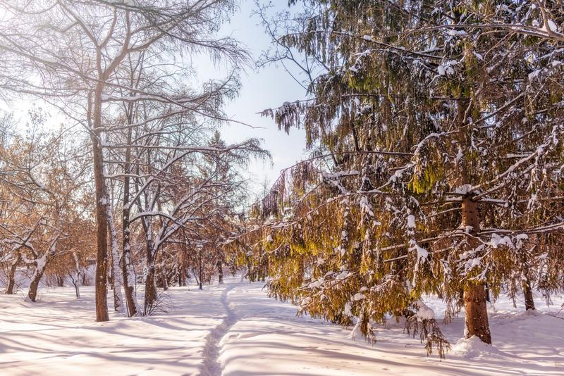 Trail in the winter snow-covered park, surrounded by trees royalty free stock photos