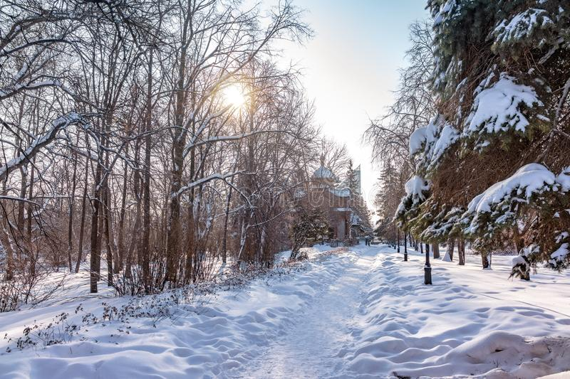 Trail in the winter snow-covered park, surrounded by trees stock photos