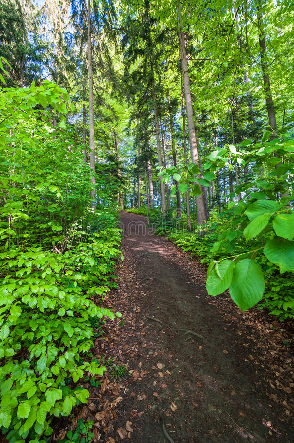 Download Trail in the wood stock image. Image of green, trunk - 27331045