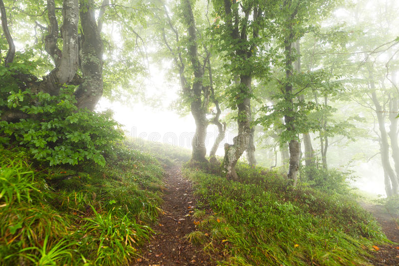 Trail in the woods vanishing in the mist. Trail in the mornigwoods vanishing in the morning mist royalty free stock photography