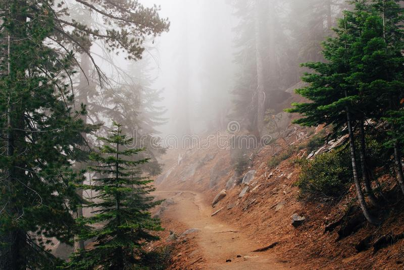 Trail in Yosemite National park. Mystery forest with dense fog stock photo