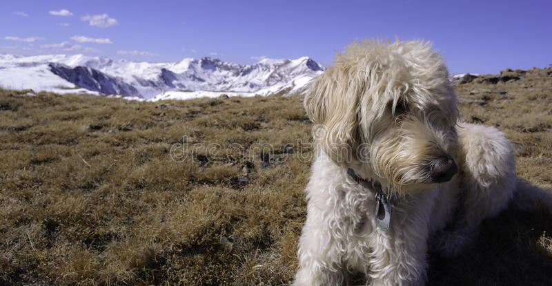 Traildog на горе древесин стоковые фото