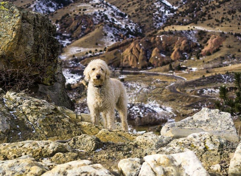 Traildog auf Ridge über Redrocks stockbild