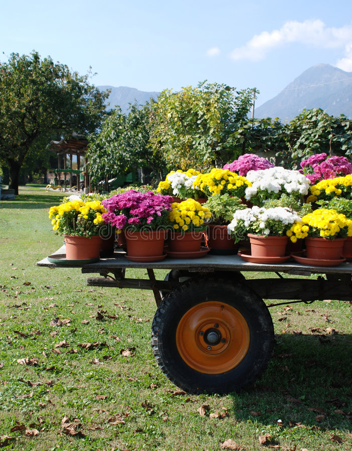 Trailer with Flower Pots. An old wooden trailer covered with plastic pots of brightly coloured flowers royalty free stock image