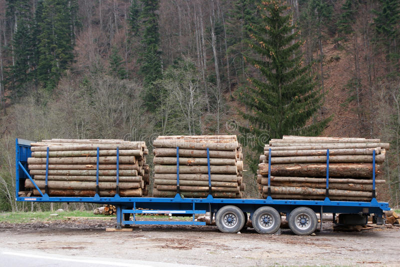 Trailer transporting trunks. Long trailer transporting trunks for a forest company stock photo